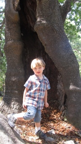 playing in the hollowed out tree